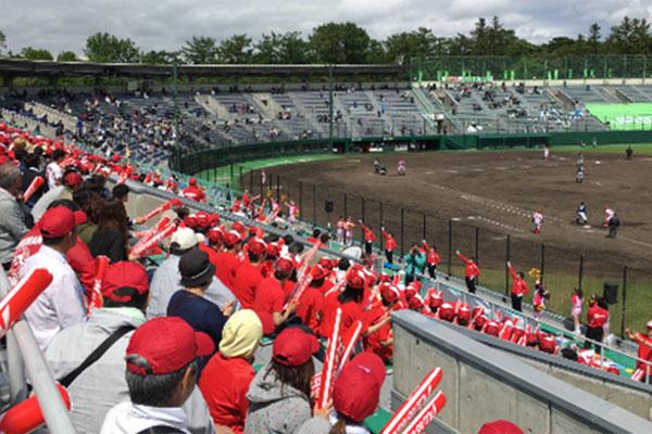 6月 札幌円山球場での野球応援